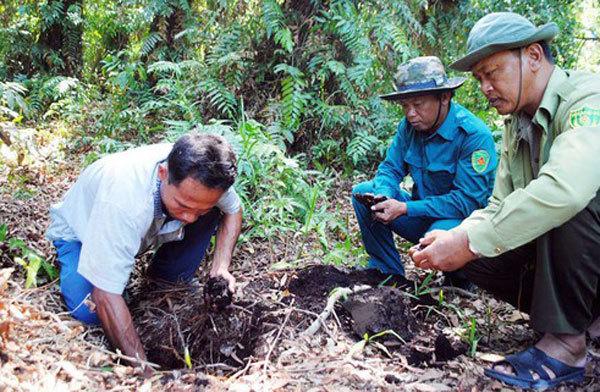 Mekong Delta, Central Highlands brace for forest fires