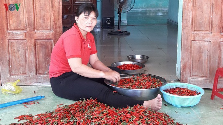 nông sản rớt giá,ớt