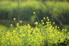 Những khoảnh khắc mùa xuân tuyệt đẹp trên đỉnh thiêng Fansipan