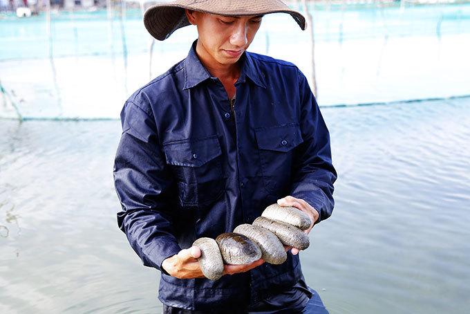 Người nuôi hải sâm giỏi nhất thế giới