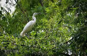 India's bird population 'going down sharply'