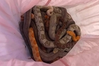 Bí ẩn những chiếc vỏ gối chứa trăn, rắn bên ngoài trạm cứu hỏa ở Anh