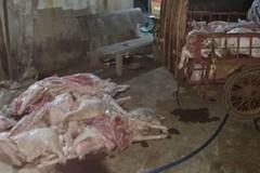 Đồng Nai: Giết mổ heo bệnh, heo chết bán cho công nhân
