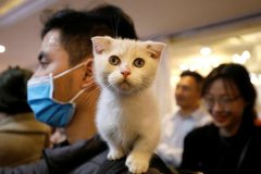 First-ever cat show held in Hanoi