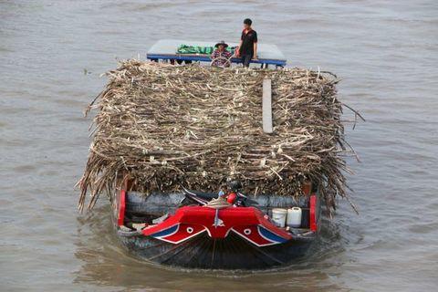 sugar industry,Prime Minister Nguyen Xuan Phuc,sugar,sugarcane