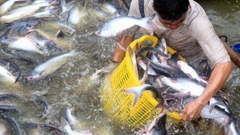 catfish,coronavirus,Mekong Delta,vietnam economy