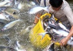 VN catfish sellers try to conquer home market