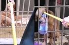 Chủ nhà kẹt ở Vũ Hán, chú chó được hàng xóm cứu đói