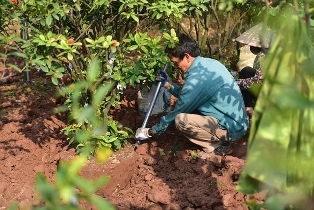 Chiêm ngưỡng vườn mẫu đơn tiền tỷ của lão nông Hưng Yên