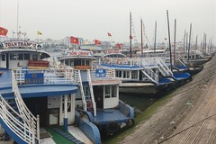 Hundreds of tour boats in Ha Long Bay left idle
