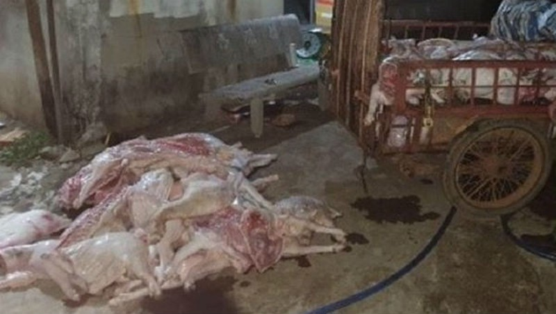 Thịt gà rẻ hơn rau, bắp cải vứt thối đầy đồng