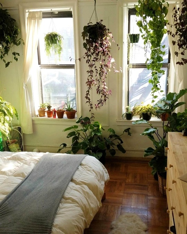 Ngã ngửa những cây mời tài lộc, đặt trong phòng ngủ lại là 'tử thần'