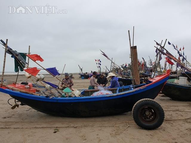Nghề độc, lạ ở Nam Định: Đi cày trên biển bắt ngao to bự
