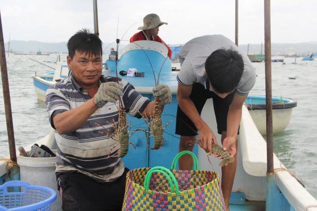 tôm hùm,hải sản đắt đỏ,giải cứu nông sản
