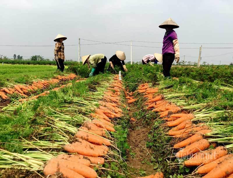 Trung Quốc thiếu hụt, Việt Nam tăng tốc chờ thu chục nghìn tỷ