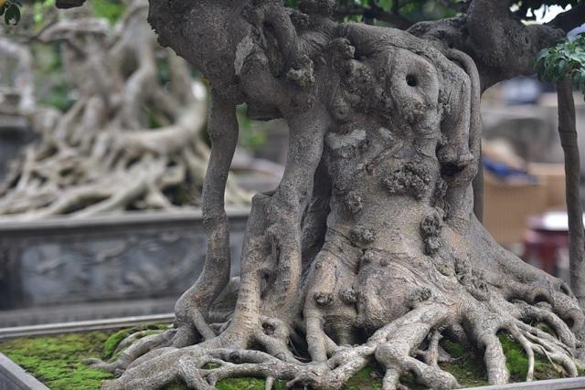Đại gia vác 2 bao tải tiền, đổi xế hộp tiền tỷ lấy cây sanh cổ trăm năm