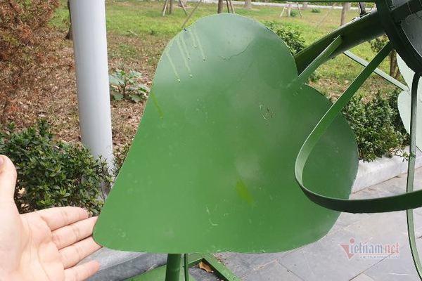 Hải Phòng đặt loạt cây sắt có lá mỏng, cao ngang cổ trẻ trong công viên