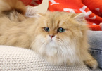 Cat lovers are feline fine over pure breed pets