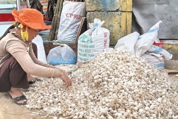 Facebook user fined for false post on Ly Son Island's garlic