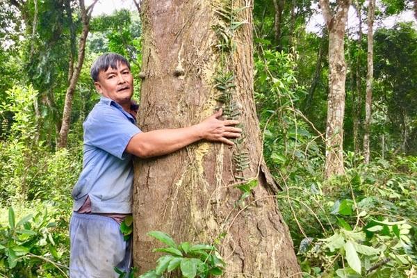 Rừng gỗ lim 'độc nhất vô nhị' của lão nông Hà Tĩnh
