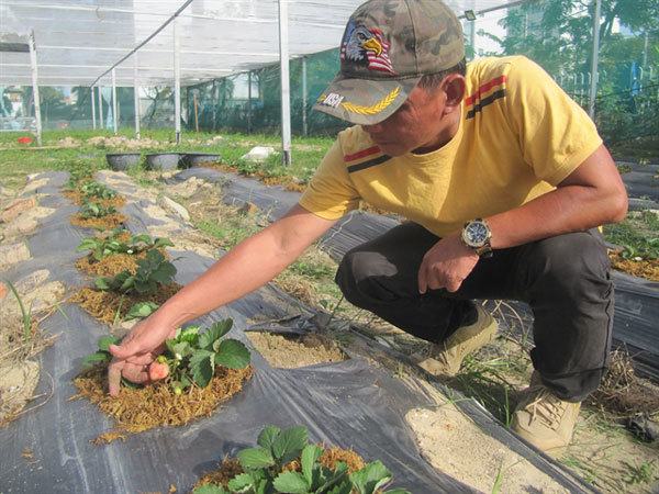 Safe farm develops from polluted dump
