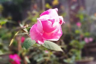 Lên mạng nói vợ cũ là gái bán hoa, người đàn ông nhận cái kết đắng ngắt