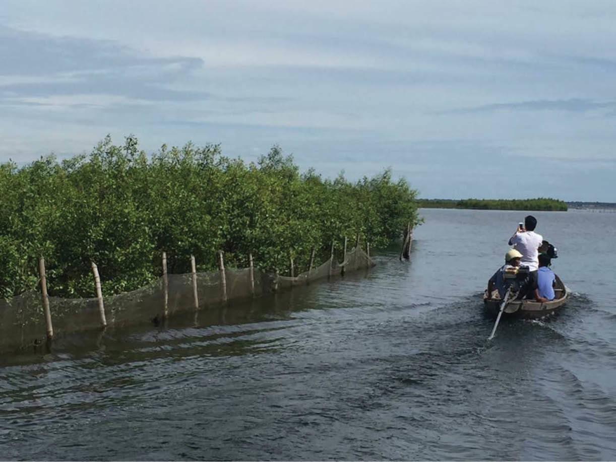 Thu hàng chục tỷ đồng từ 'báu vật' rừng ngập mặn