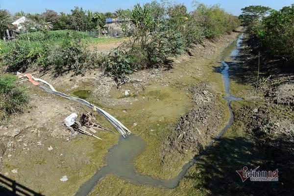 Hạn mặn đạt đỉnh, Bộ Nông nghiệp yêu cầu ứng phó gấp