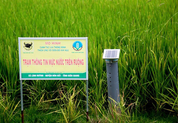 Mekong Delta farmers expand smart rice farming