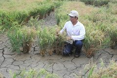 Mekong Delta saline intrusion to be worse this year