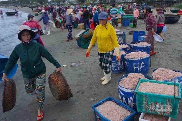 Trúng đậm ruốc biển, ngư dân kiếm tiền triệu mỗi ngày