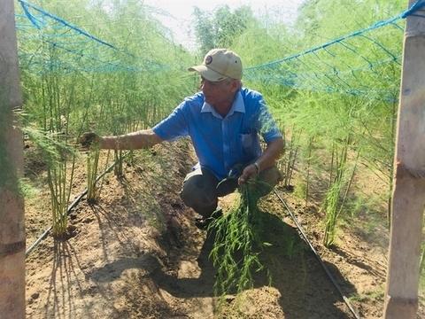 Vietnamese asparagus could enter Australian market this month