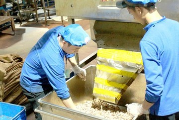 VN cashew market hard to forecast due to coronavirus outbreak