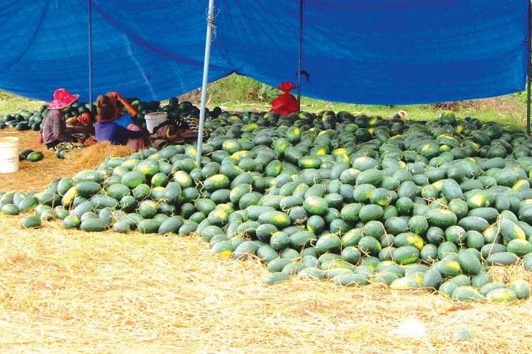 VN cross-border trade suffers heavily in Covid-19 crisis