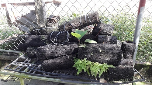 Vườn lan rừng tiền tỷ của kỹ sư tin học bỏ phố về quê Hà Tĩnh