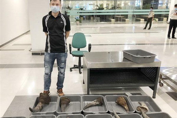 Nearly 30kg of rhino horn seized at Can Tho Airport