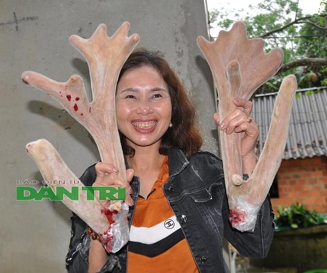 Ngắm cặp nhung 'siêu khủng', bán giá gần cả cây vàng tại Hà Tĩnh
