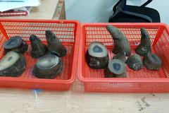 Bắt 1 người từ Qatar mang hơn 6,2kg sừng tê giác Châu Phi qua sân bay