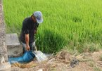 Mekong Delta gets VND70 billion for seawater intrusion control