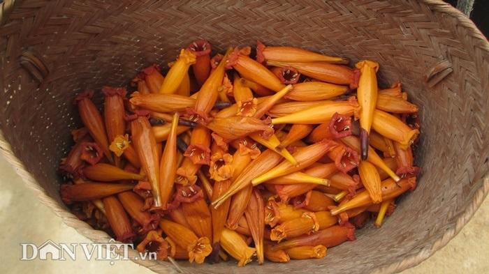 Đặc sản Sơn La, ăn thứ hoa dại một lần nghiện cả đời