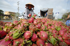 Vietnam seeks new markets for farm produce
