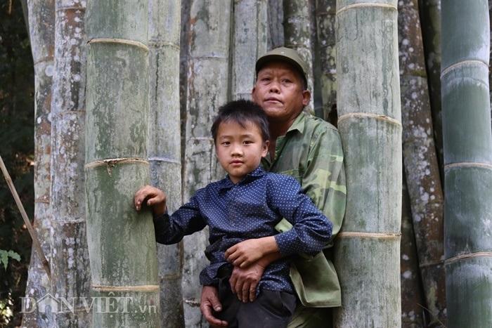 Đi tìm loài tre khổng lồ ví như 'báu vật' trên đỉnh núi thiêng Sơn La