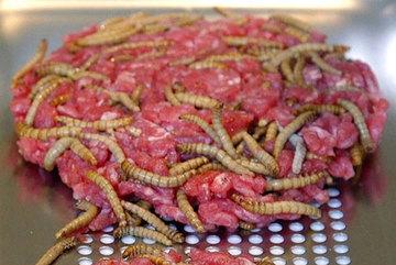 Chế biến sâu bọ, dế thành nguồn thực phẩm cho tương lai