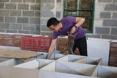 Bamboo rats help farmer escape poverty