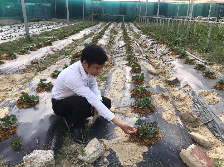 Đà Nẵng: 7X 'hái' tiền đều như vắt chanh từ vườn rau thủy canh