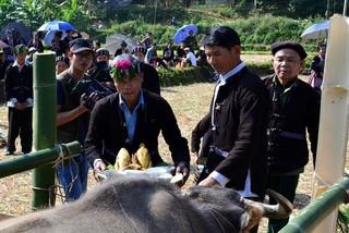Buffalo worship of Lu ethnic group