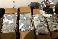 Gã đàn ông ở Lâm Đồng trồng cần sa đóng gói như chè