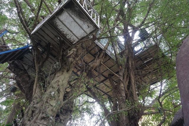 Kỳ lạ quần thể nhà xây dựng trên cây cổ thụ trăm tuổi 'độc nhất' Hà Nội