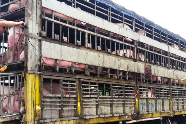 GĐ Sở Nông nghiệp Thanh Hóa 'đột kích' cơ sở giết mổ lợn giữa lòng thành phố