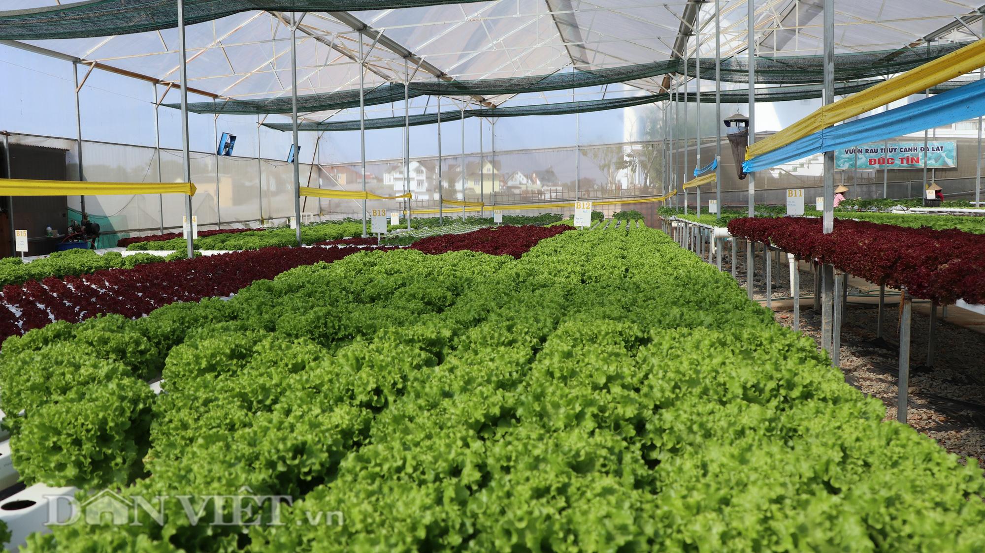 Cất bằng thạc sĩ, 8X về trồng rau thu hàng trăm triệu mỗi tháng